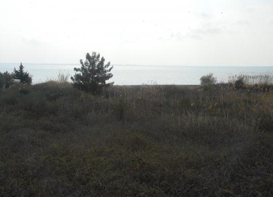 DSCN1704